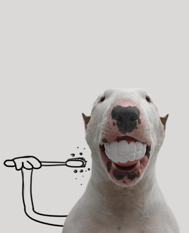 Searttle Dentist